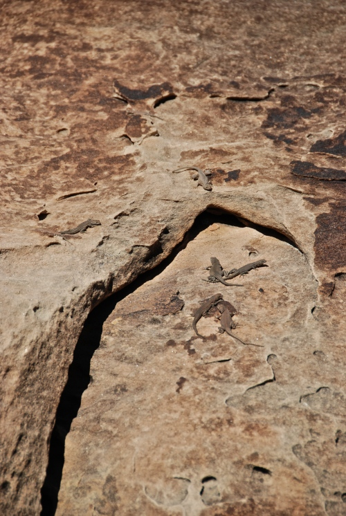 Lizards at Triassic, UT