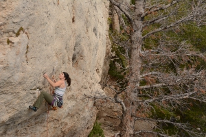 Leslie - Limestone Cowboy 5.12a - Wild Iris